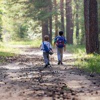 Два брата, прогулка по лесу) :: Ольга Куренкова