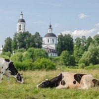 Сельская жизнь :: Елена Решетникова