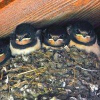 Ласточкино гнездо :: Евгений Фирсов
