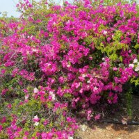 цветущий Кипр :: tgtyjdrf