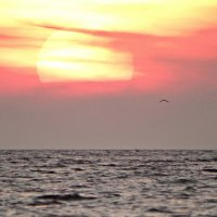 Залив,горизонт и солнце. :: Владимир Гилясев