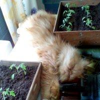 Сама садик я садила, сама буду поливать... :: Владимир Рязанов