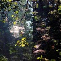 В утреннем лесу :: Андрей Скорняков