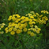 Цветы июля :: Андрей Лукьянов