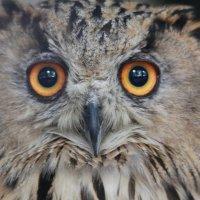Глаза - зеркало души :: Владимир Плужников