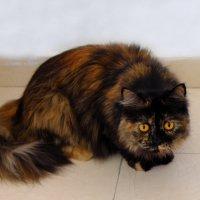 кошка диковатая Лены :: Александр Деревяшкин