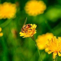 Пока ещё цветут цветы :: Анатолий Клепешнёв