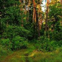 Пахнет лес малиной и грибами... :: Лесо-Вед (Баранов)