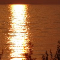 Закатное золотое заливное. :: Владимир Гилясев