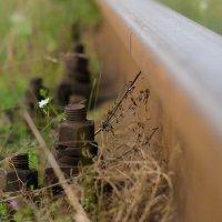 Когда то здесь тоже ходили поезда..... :: Елена Фролкова