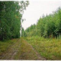 Лесные стёжки-дорожки.. :: марк