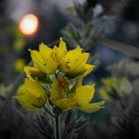 Мелодия заката. :: Андрей Самсонов