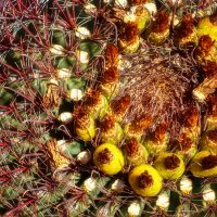 веселый кактус :: svabboy photo