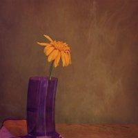 Одинокий цветок :: Надежда