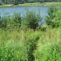 По  тропинке к озеру :: Елена Семигина