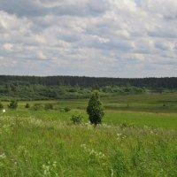 Вижу чудное приволье, вижу нивы и поля. Это русское раздолье, это русская земля! :: Елена Швецова