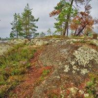 Сосны любят высоту :: Валерий Талашов