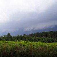 Погода :: Diana Razgulova