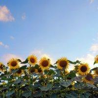 небо и цветы :: Elena Wymann