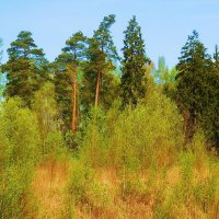 Весенний пейзаж :: Маргарита Батырева