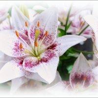Белые лилии... :: марк