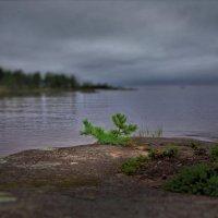 На севере диком ... :: Валерий Талашов