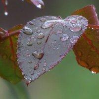 После дождя :: Михаил Цегалко