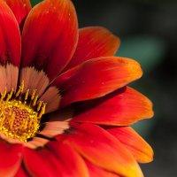 цветок :: Natalia SabliNA