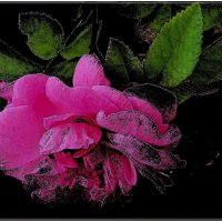 Розовая дрёма :: Нина Корешкова