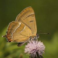 Бабочкин портрет :: Андрей Пристяжнюк