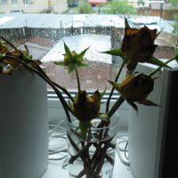 на окне :: Ольга