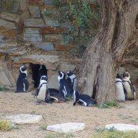 Пингвины под оливковым деревом. :: Оля Богданович