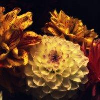 Макро. Серия: Цветы :: Наталия Рой