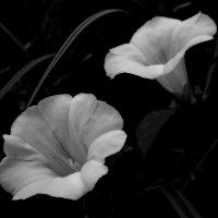 Чистота и непорочность :: Надежда Щукина