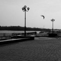 Прогулка по набережной :: Надежда Щукина