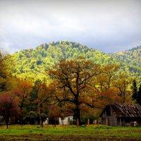 это не осень, а весна в Адыгее))) :: Lilek Pogorelova