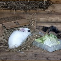 Кролики :: Вера