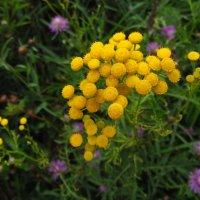 Цветы августа :: Андрей Лукьянов