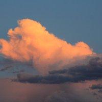 Небесный пудель! :: Андрей