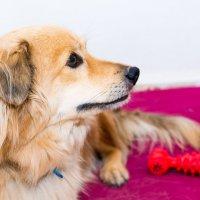 Жизнь собачья... :: David Rinenberg