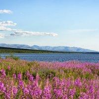 на берегу озера :: Виктор Батавин
