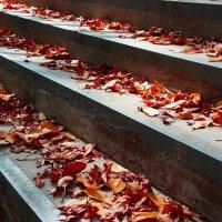 Осень в городе :: Надежда Щукина