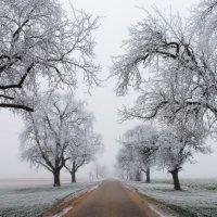 зимняя аллея :: Elena Wymann
