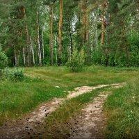 Куда дальше - пошли налево! :: Владимир Шошин