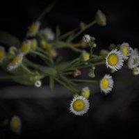 Цветочки) :: Anastasia Silver