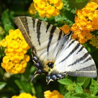 Бабочка :: Оля Богданович