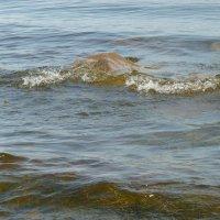 Тихо  плещется  волна.... :: Galina Leskova