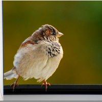 красавчик) :: linnud