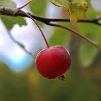 Райское яблоко :: Avada Kedavra!