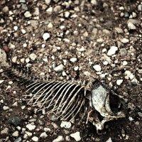 dead fish :: Антон Ешурин
